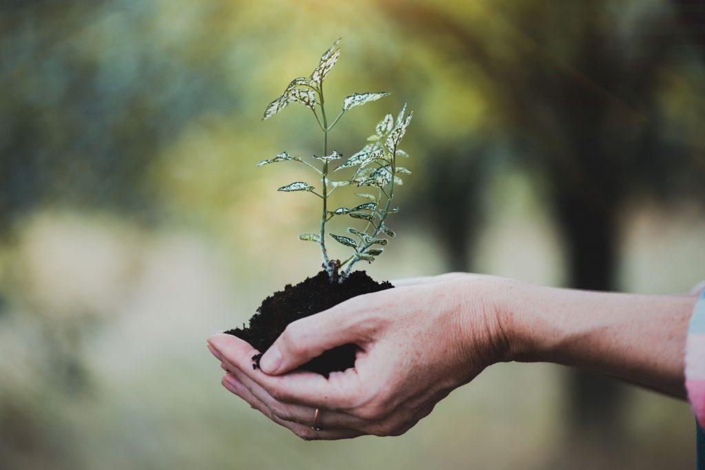 15 Ideen für kleine Schritte in Richtung Nachhaltigkeit.